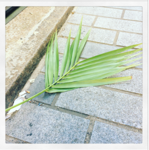 a palm frond laying on the ground in an alley next to some cigarette ends
