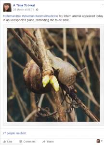Snip from ATTH Facebook of my post with the photo of the snail sitting at head height on a creeper branch